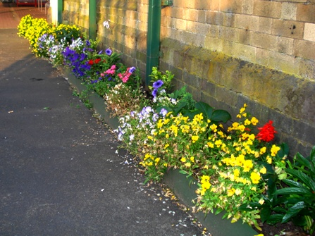 The flower bed built by FOWS at the west end of Manchester platform at Walkden.